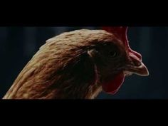 New EClass TV Commercial The Journey MercedesBenz Original - Chickens brilliantly featured in mercedes benz commercial