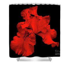 Red hot bearded iris flower shower curtain.  Flower art by Susan.