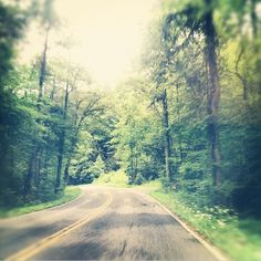 """If you are traveling into the Shoals and have the time for a scenic drive, we recommend taking part of your journey on the Natchez Trace Parkway. The """"Trace"""", as some locals call it, stretches from Jackson, Mississippi, to Nashville, Tennessee. It spans 444 miles of near-continuous greenway and is inhabited by thousands of species of plants, birds, amphibians, and mammals. Make stops at the many reservoirs, waterfalls, and archaeological sites—and learn about its role in American history."""