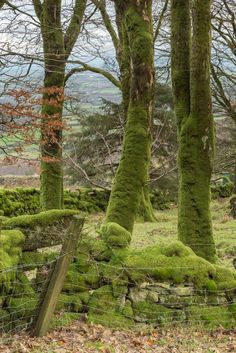 near Cheesewring Quarry, Cornwall, England by Pommyjon