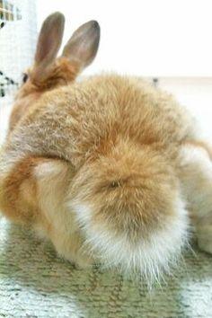 Lil Bunnies - Untitled