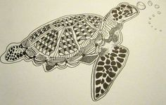 zentangle sea turtle - Google Search