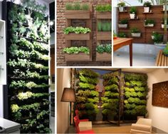 horta em apartamento parede
