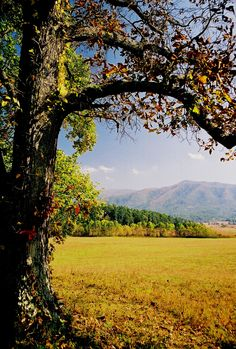 Cades Cove fields in the Great Smoky Mountains National Park