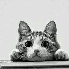 #Cute #little #curious #cat #blacknwhite . . . #catsofinstagram #catstagram #kitty #cutekittens #cutecats #cats #kittens #kitten