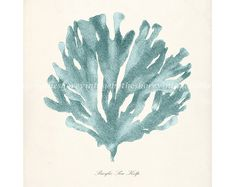 Vintage Sea Kelp Wall Decor Print No. 1 8x10 Seafoam. $15.00, via Etsy.
