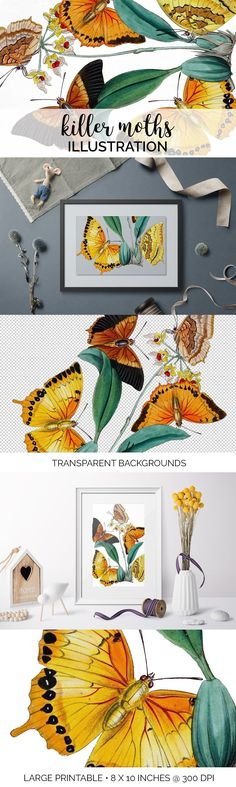 Butterfly Watercolor, Watercolor Artwork, Orange Butterfly, Butterfly Design, Color Correction, Large Prints, Free Books, Moth, Illustration