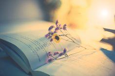 DSC s - Mình kẹp bông hoa trong cuốn sách đó,nếu cậu hok đọc sẽ chẳng bao h biết đc món quà mình tặng cậu