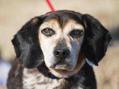 Adopt Vinny George On Animals Animal Shelter Humane Society