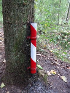 Fill the tube with a couple of small buckets of water and the geocache will appear. A nice geocache in the woods of Nuenen, near Eindhoven, the Netherlands.