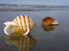 conchas marítimas sobre la playa