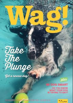 2015 Summer Dogs Trust Supporter Magazine  Front cover of our 2015 Summer edition! Take the plunge – get a rescue dog! PLUS be dog smart, what is your dog trying to say?  Dog Training, dogs in water, dogs and tennis balls, collie cross, border collie, supporter magazine, subscription, dogs trust, rescue dogs, rehoming, a dog is for life.
