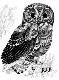 Incredibly Detailed Animal Illustrations My Modern Metropolis
