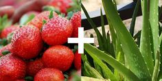 """Make Your Berries Last Longer with Aloe?"":  Experiment with aloe juice in a #plant #science project to see if it makes a difference in how long berries last. [Source: Science Buddies, http://www.sciencebuddies.org/blog/2015/07/strawberries-and-aloe.php?from=Pinterest] #STEM #scienceproject"