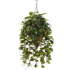 Vining Mixed Greens With Cone Hanging Basket ($180) ❤ liked on Polyvore featuring home, home decor, small item storage, green home decor, green home accessories, vine basket, green basket and watering can