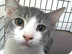 Pet Adoption has dogs, puppies, cats, and kittens for adoption. Adopt a pet Downey California, Pet Adoption, Fur Babies, Kitten, Meet, Puppies, Cats, Blog, Animals
