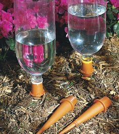 Spiked Drinks for Your Plants: Hydrate your plants with these  watering spikes (6 for about $10) plugged into repurposed liter bottles.