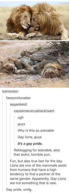Try and tell me that homosexuality isn't natural!!! <<< lions should be homosexuality's mascot!>>> OMG YES!!! Aww that is too cute. Gay Pride!