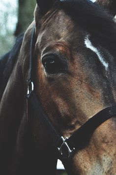 Standardized Horse,, All The Pretty Horses, Beautiful Horses, Animals Beautiful, Cute Horses, Horse Love, Equine Photography, Animal Photography, Cavalo Wallpaper, Animals And Pets