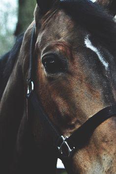 Standardized Horse,,