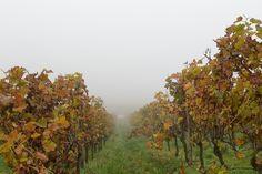 Grauer Novembertag im Weinberg von Rheinhessen © M. Rockstroh-Kruft, www.rheinhessen-foto.de