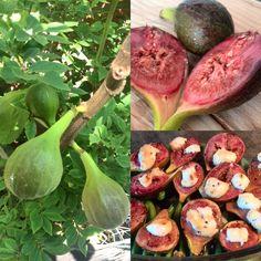 Oogst uit eigen tuin! #vijgen #prachtig #heerlijk #homegrown #fig #delicious