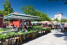 A typical farmers market at Lendplatz in Graz © Graz Tourismus - Harry Schiffer Innsbruck, Salzburg, Urban Farmer, Hotels, Heart Of Europe, Travel Information, Plan Your Trip, Farmers Market, Vacation