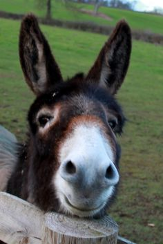 The Donkey wishes you a Happy New Year! via muffinn on Flickr