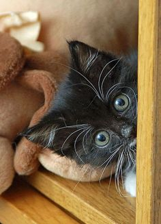 hide and seek black kitten cat    I have 119 WONDERFUL Cat and Kitten pins to share with YOU!  http://pinterest.com/MsMaine/meow-i-love-cats/
