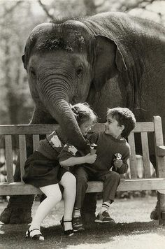 Elefante gran mascota