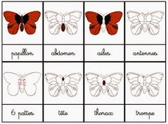 Crapouillotage: Cartes de Nomenclatures : Le Papillon Science Montessori, Nature Letters, French Education, Bugs, Animal Science, Butterfly Dragon, Outdoor Classroom, Matching Cards, Teaching French
