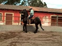 Horse Training - Lagos de Moreno, Jalisco, Mexico - YouTube
