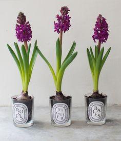 10 cadeaux DIY avec des végétaux ou des fleurs
