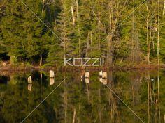 reflection on lake. - Reflection of trees on lake.