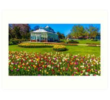 Tulips in Full Bloom at the Conservatory - Bendigo, Victoria Art Print