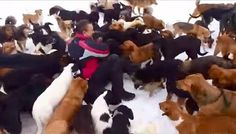 Man Hates To See Dogs Suffering, So He Saves 450 Of Them