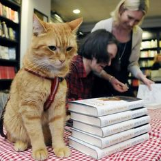 "Bob at the book-signing of ""A Street Cat Named Bob"" at Waterstones London"