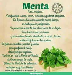 Health And Wellbeing, Health And Nutrition, Good Luck Spells, Detox Your Home, Magic Herbs, Natural Health Remedies, Good Energy, Detox Tea, Kraut