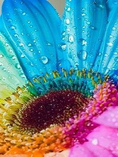 Download Colorful Flower Mobiles Wallpaper 38298 From Mobile Wallpapers This Is Compatible For Nokia Samsung Htc Imate