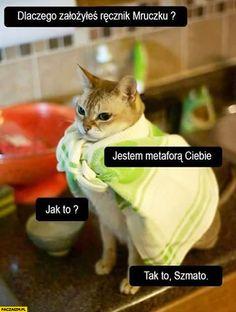 Dlaczego założyłeś ręcznik Mruczku? Jestem metaforą Ciebie szmato