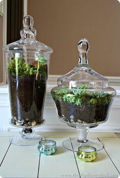 DIY a succulent terrarium - fun way to add greenery to your home