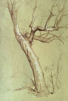 Sam на доске how to draw realistic trees, plants bushes and rocks Landscape Sketch, Landscape Drawings, Landscape Art, Landscape Paintings, Tree Sketches, Drawing Sketches, Art Drawings, Pencil Drawings, Sketching