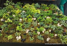A closer look at the small and miniature Hostas, on Hogarth Hostas exhibit, at the RHS Chelsea Flower Show Hampton Court, Chelsea Flower Show, Pumpkin, Exhibit, Closer, Miniature, Plants, Conservation, Image