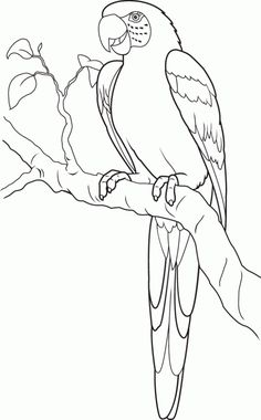 Parrot Coloring Pages For Kids from Animals Coloring Pages category. Find out more nice coloring pages for your child Art Drawings For Kids, Pencil Art Drawings, Bird Drawings, Animal Drawings, Easy Drawings, Drawing Sketches, Drawing Sheets For Kids, Drawing Ideas, Bird Coloring Pages