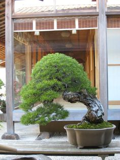 Shunka-en is the bonsai museum of Kunio Kobayash located in Tokyo. A very high standard of trees and a beautiful building complex to view them in makes for a fantastic place to visit. The web site …