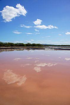 Cabo Rojo National Wildlife Refuge, Boqueron, Puerto Rico Pink Salt Pond