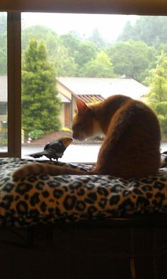 My cat & bird reunited after they were apart for almost a month :-)