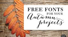 Free Fonts for DIY Autumn Projects - Volume 1 | Elegance & Enchantment
