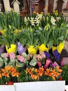 Beautiful Spring Flowers at Rt. 522 Country Crafts in Beaver Springs.