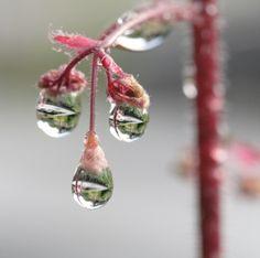 waterdruppels aan bloem